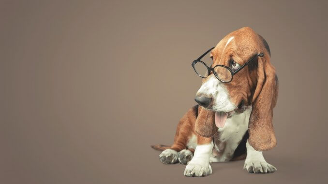 Basset Hound Names Feature