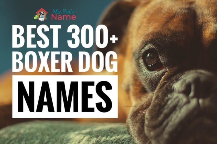 Boxer Dog Names