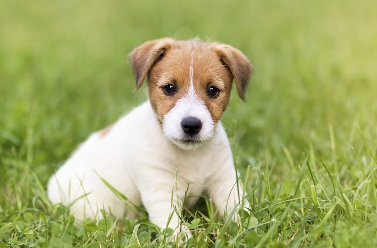 Boy Puppy Names
