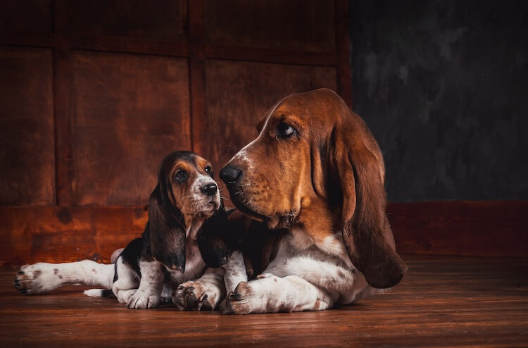 Cool Basset Hound Names