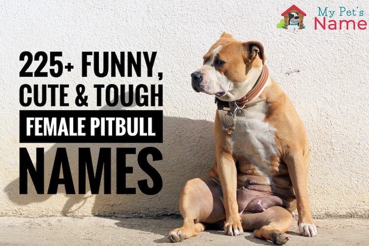 Female Pitbull Names