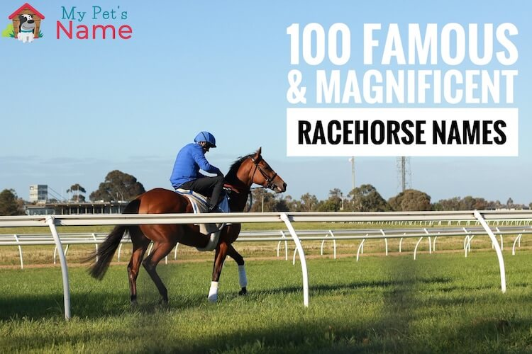 Racehorse Names