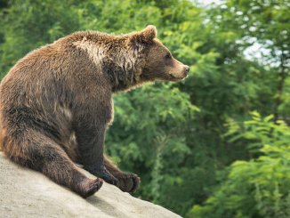 Bear Names Feature