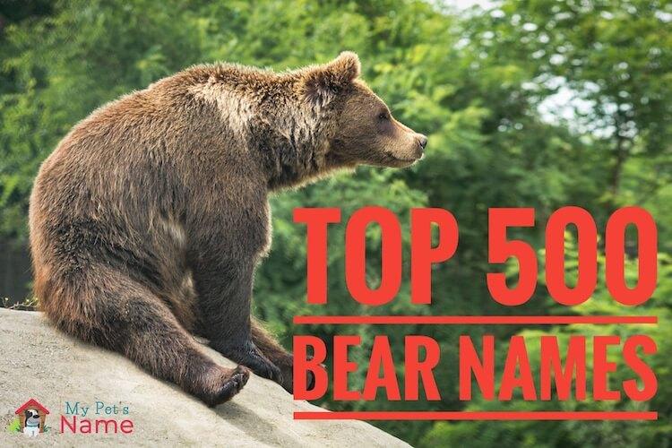 Bear Names