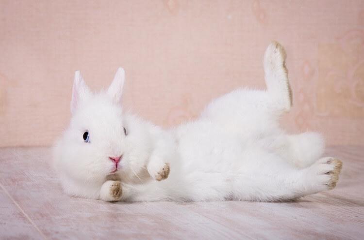 Famous Rabbit