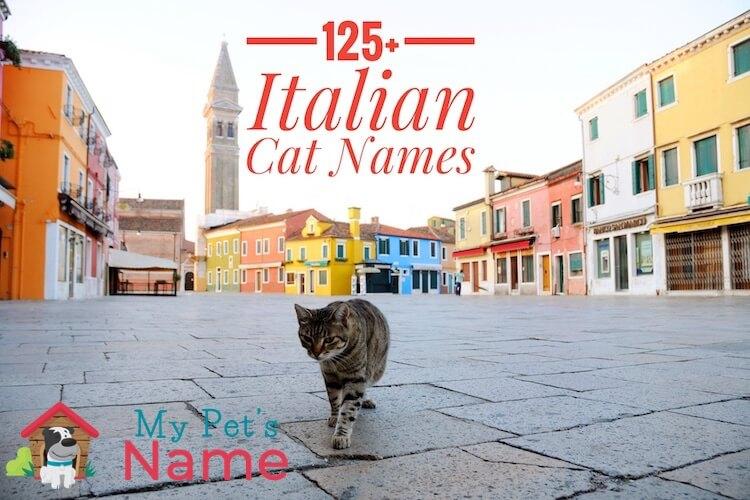 Italian Cat Names