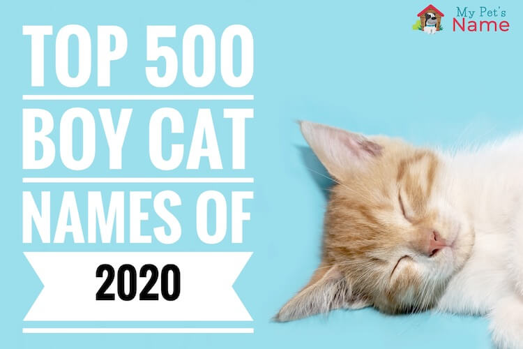 Top 500 Boy Cat Names: Cute, Best, Strong & Cool Ideas – My Pet's Name