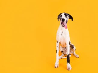 Great Dane Names Feature