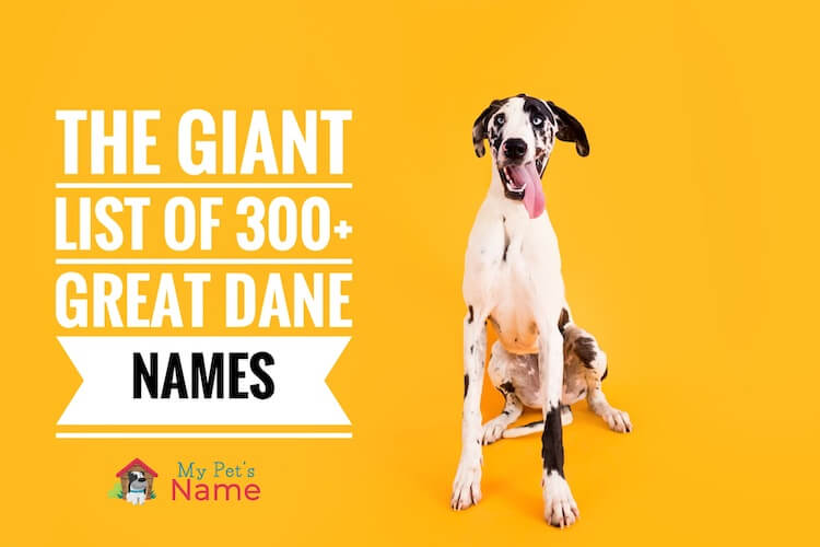 Great Dane Names