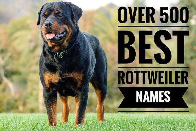 Rottweiler Names