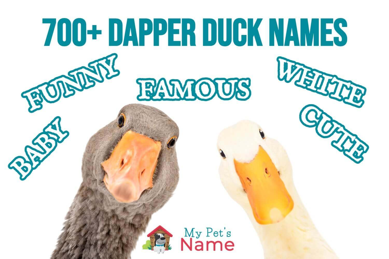 700+ Dapper Duck Names (2)