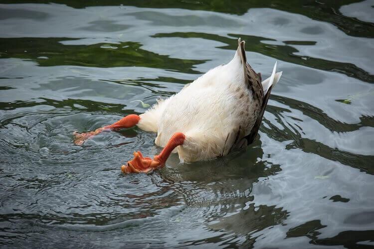 Duck Diving Bottom Up