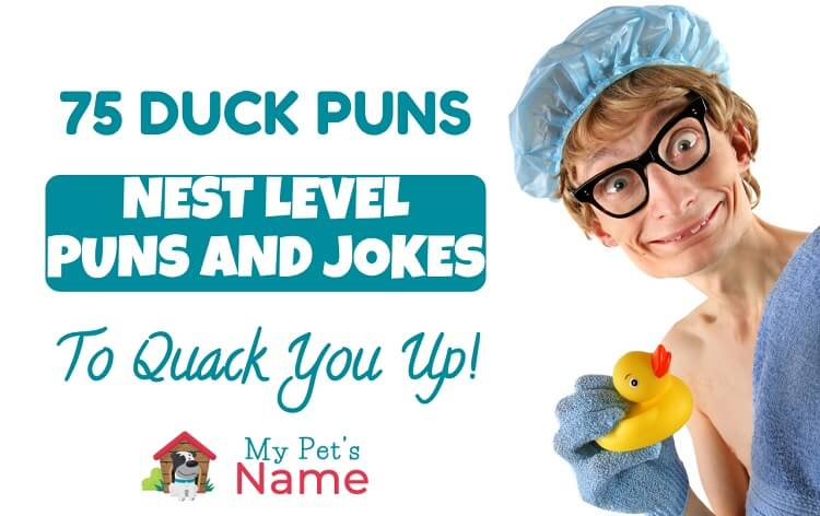 Duck Puns and Jokes My Pet's Name
