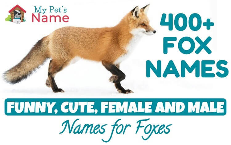 Red Fox Names