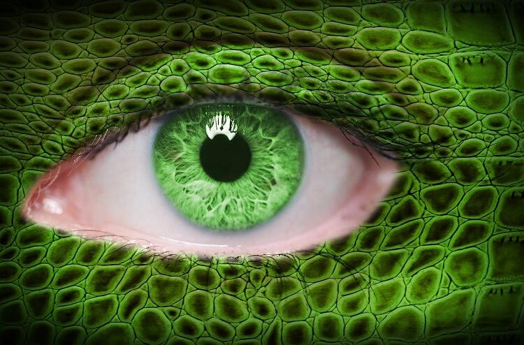 Lizard Skin Green Eye