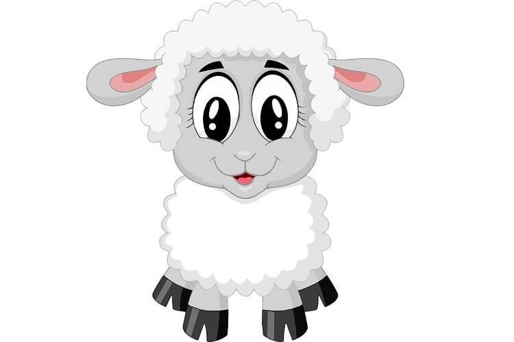 Cute Animated Sheep